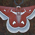 Silk Moth by Jeff Sartain