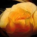 Silken Yellow Rose by Kae Cheatham
