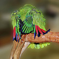 Silly Amazon Parrot by Smilin Eyes  Treasures