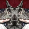 Silly Dog by Lynn Sobecke