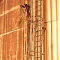 Silo Ladder by Jill Reger