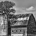 Silo Tree Black And White by Kristie  Bonnewell