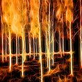 Silver Birches Flaming Abstract  by Mo Barton