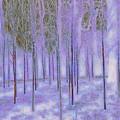 Silver Birch Magical Abstract  by Mo Barton