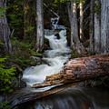 Silver Falls by Jason Roberts