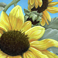 Silver Leaf Sunflower Growing To The Sun by Adam Johnson