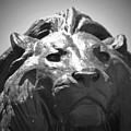 Silver Lion by Jost Houk
