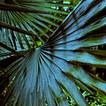 Silver Palm Leaf by Susanne Van Hulst