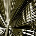 Silver Palm by Susanne Van Hulst