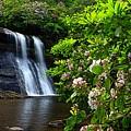 Silver Run Falls Mountain Laurel by Carol Montoya