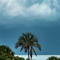 Silver Sarasota Sunrise by Susan Molnar