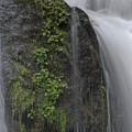 Silverdale Falls by Rod Wiens