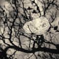Silvery Leaf II Toned by David Gordon