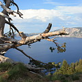 Silvery Tree Over Crater Lake by Carol Groenen