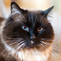 Simon Cat by Mike Reid