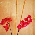 Simple Floral Arrangement  by David Lane