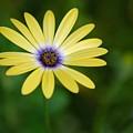 Simple Flower by Jennifer Englehardt
