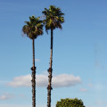 Simple Palms by Arline Wagner