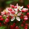 Simple Savory Spring by Elizabeth Dow