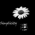Simplicity Daisy by Barbara St Jean