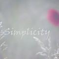 Simplicity Misty Poppy by Barbara St Jean