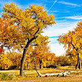 Simply Autumn by Robert Meyers-Lussier
