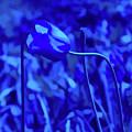Simply Blue Pink Tulip by Aimee L Maher ALM GALLERY