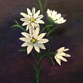Simply Daisies by Kimberley Gates
