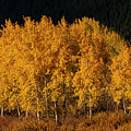 Simply Gold  by Bob Phillips