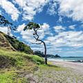 Simply New Zealand by Shane Linke