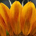 Simply Petals by Debra Straub