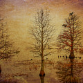 Simply Trees by Carolyn Dalessandro
