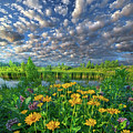 Sing For The Day by Phil Koch