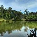 Singapore Botanical Gardens by Nisah Cheatham
