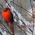 Singing Cardinal Christmas Card by Lois Bryan