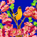 Singing Oriole by Lucyna A M Green