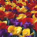 Singing Tulips L062 by Yoshiki Nakamura