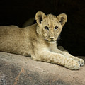 Single Cub by Linda D Lester