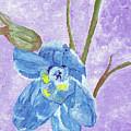 Single Delphinium Flower by William Bowers