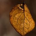 Single Fall Leaf by Alissa Beth Photography