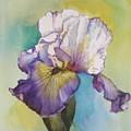 single Iris by Diane Ziemski
