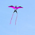 Single Kite by Linda Kerkau