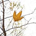 Single Leaf In Fall by Steve Wile
