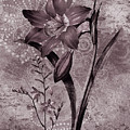 Single Lily-vintage Series  by Grace Iradian
