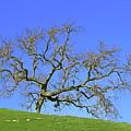 Single Oak Tree by Art Block Collections