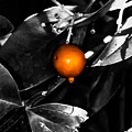 Single Orange Berry by Heather Joyce Morrill