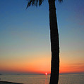 Single Palm And Sunset by Susanne Van Hulst