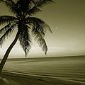 Single Palm At The Beach by Susanne Van Hulst