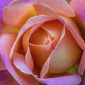 Single Peach Pink Rose by Julie Palencia