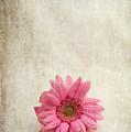 Single Pink by Randi Grace Nilsberg